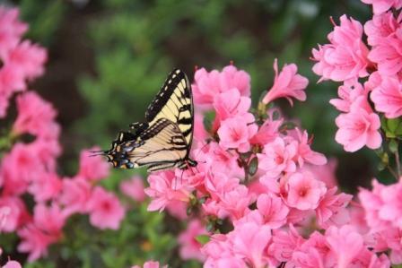 Butterflys....